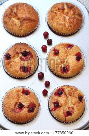 Muffins with berries cranberries in the baking dish