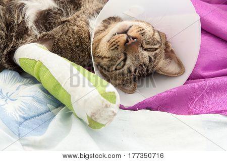 cat wearing a Elizabethan collar and Cat leg splint sleeping on fabric.