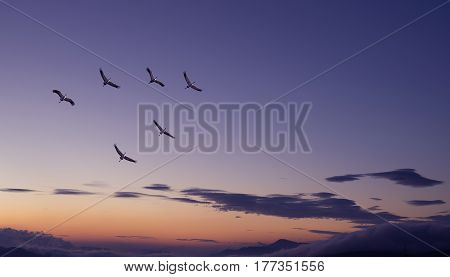Flock of birds spring or autumn migration panoramic view
