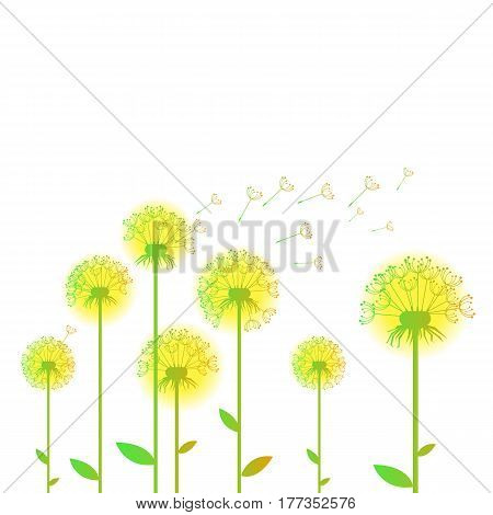 dandelion vector background botany flower blossom fluffy