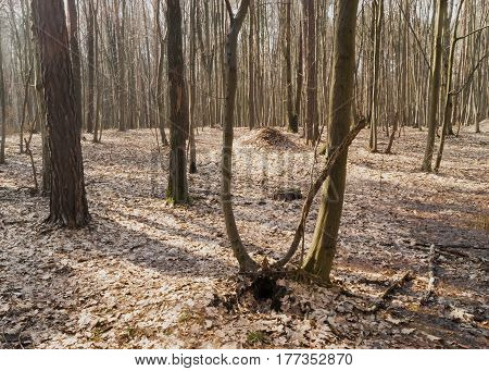 Deciduous forest on a Sunny spring day