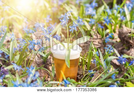 beer and blue flower spring, snowdrops Scilla Squill, soft focus. nature background.