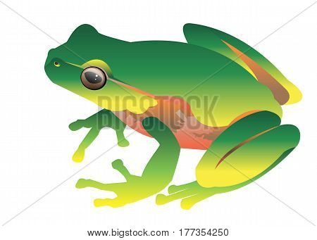 frog vector toad green small illustration color