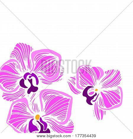 Cartoon illustration of orchid vector icon for. Hand drawn set with orchid flowers. Black and white vector illustration.