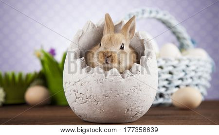 Rabbits with Easter on wooden background