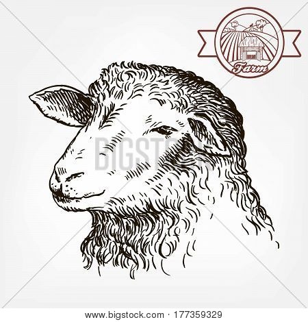 sketch of sheep drawn by hand on a white background. animal husbandry