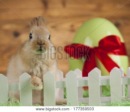 Little Easter bunny