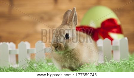 Baby bunny and egg on wooden background