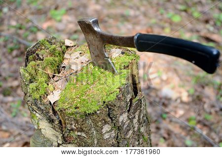 Axe in an old stump covered with a moss
