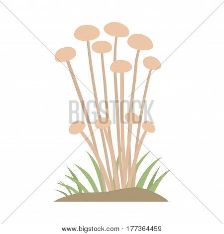 Poisonous mushroom nature food vegetarian healthy autumn edible and fungus organic vegetable raw ingredient vector illustration. Gourmet poison not eating drawing grow plant.
