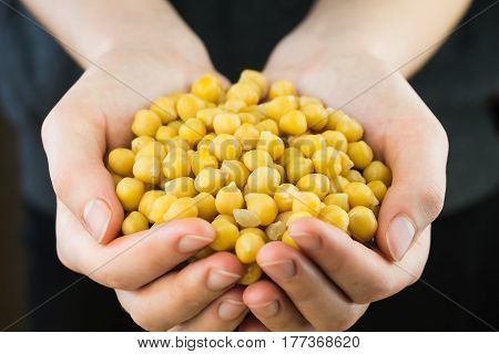 Cheakpeas in hands. Handful of natural organic gram-chick peas in female hands