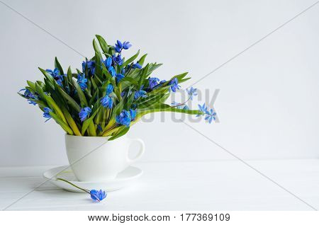 Bunch Of Tender Squill (scilla, Galanthus) Blue Flowers In A Tea Cup With Water On White Background