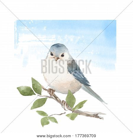 Bird on branch. Blue background. Watercolor spring illustration