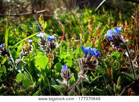 Spring Flowers Blooming In Poleg Stream Near The Mediterranean Sea, Central District Of Israel.