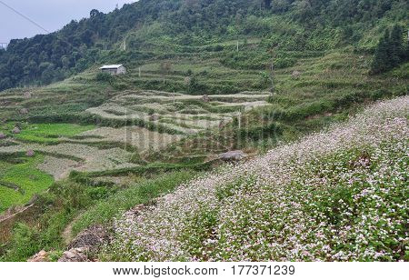 Mountain Scenery In Ha Giang Province, Vietnam