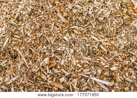 Closeup of a heap of wood chips after pruning of trees at the end of the winter season.