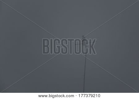 One carrion crow (corvus corone) sitting on branch in mist and fog