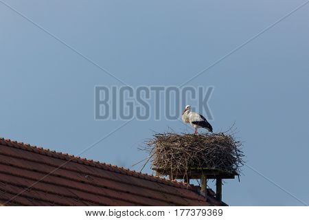 one white stork (Ciconia ciconia) in nest on house roof with blue sky