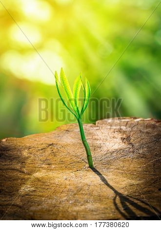 Fresh green small plant growing on dead stump tree with sunlight, successful business concept.