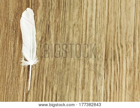 White bird feather on brown wooden background with empty space for text.Toned image.