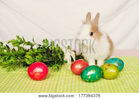 Furry rabbit with Easter eggs on green background. Easter concept