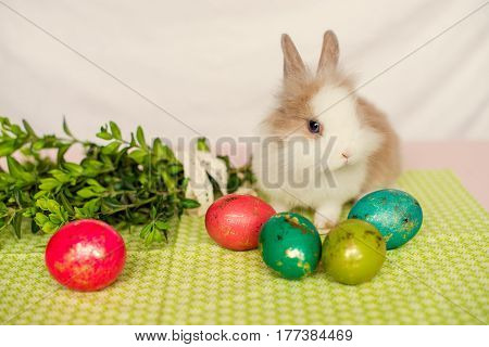Little furry rabbit with Easter eggs on green background. Easter concept