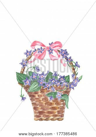 Wicker basket with violets. Watercolor hand drawn basket with violets and butterfly isolated on white background. For greetings card design.