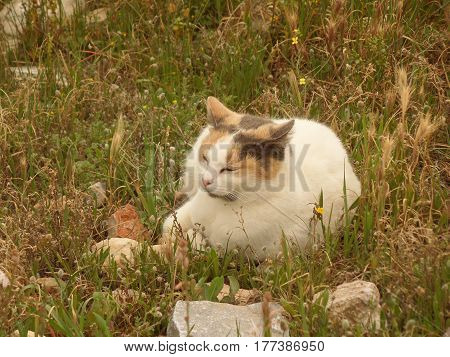 One Cute Calico Cat Napping on the Field of Acropolis, Athens of Greece