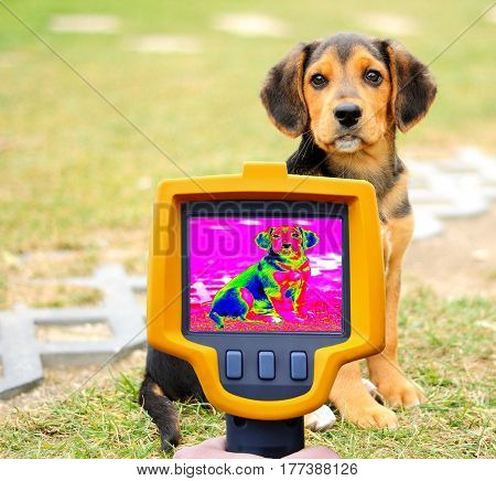 Dog Heat Loss Recording with Infrared Thermal Camera.