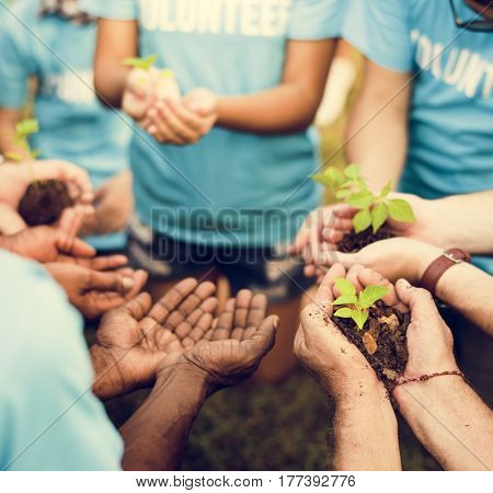 Group of volunteer with sprout for growing