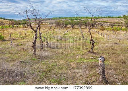 Abandoned garden with carved and dry trees