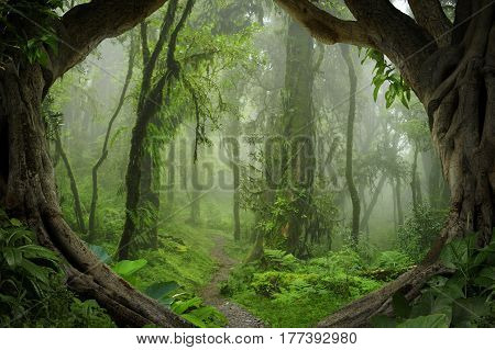 Subtropical jungle of Nepal in the Annapurna area