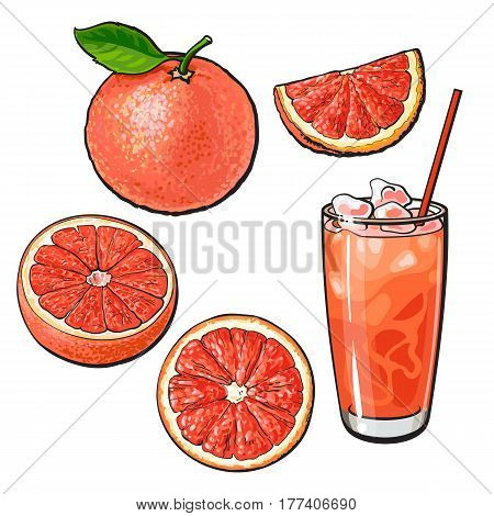 Set of whole, half, quarter grapefruit and glass of fresh juice with ice, sketch style vector illustration on white background. Hand drawn whole and cut grapefruit and glass of juice with ice