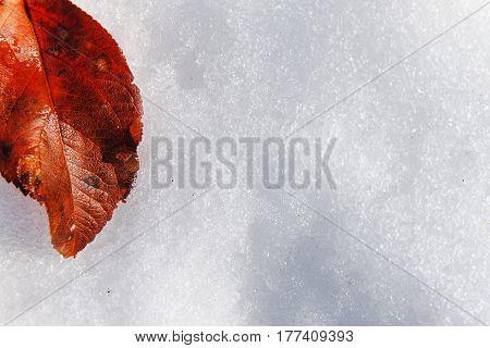 Red Fallen Leaf