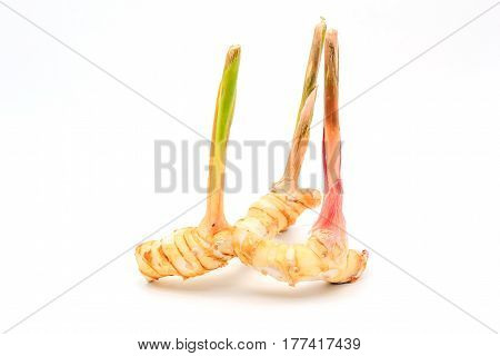 Greater galangal isolated on the white background