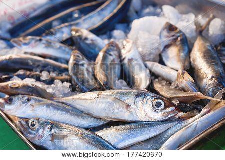 Box full of freshly caught mackerel fish. Early winter morning on Marsaxlokk market Malta.