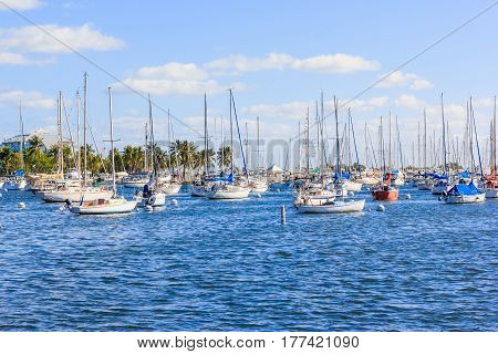 Coconut grove marina in south miami florida in blue sky background