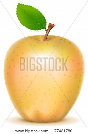 Yellow transparent sort apple with green leaf. Isolated on white vector illustration