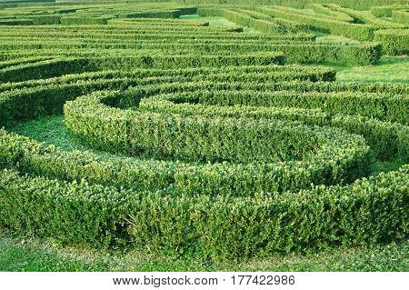 Green Labyrinth In The Garden