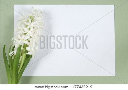Hyacinth flowers and place for text holiday postcard