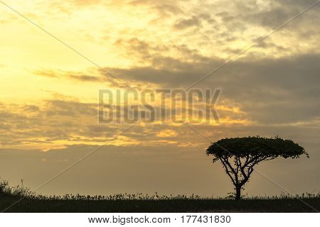 One tree sunrise at Almscliffe Crag,Silhouette of African safari scene with animals