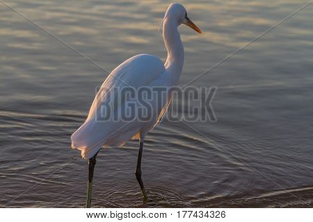 Heron On Sunrise Over The Sea