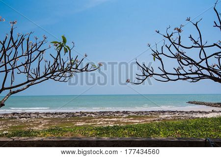 Beautiful daytime sky of the sea grass and tree , perfect sky and water.