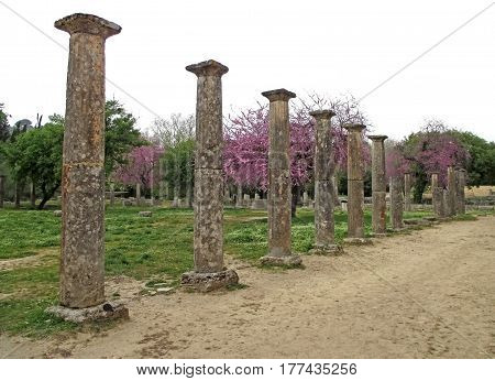 The Ruins of the Ancient Greek with Pink Flowering Tree, Archaeological Site of the Ancient Olympia, Greece