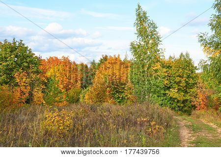 Scenic Autumn Landscape With Colourful Trees, Grass And Other Vegetation On  Hill And Clouds On Blue