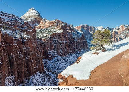 Winter snow in Zion National Park Utah