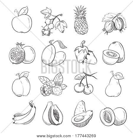 Hand drawing doodle fruits vector illustration for fruit packaging. Harvest fruit and healthy plant graphic