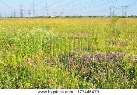 Summer field with wild flowers by day.