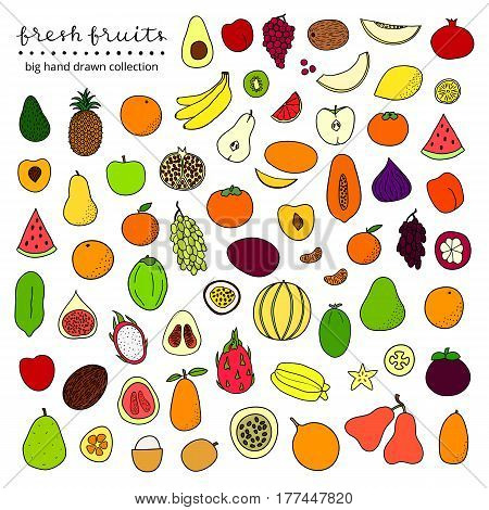 Big collection of hand drawn colored popular tropical and temperate fruits isolated on white background.