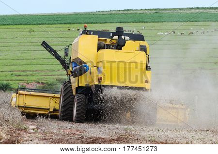 Tractor Dispensing Debris From The Soybean Plant